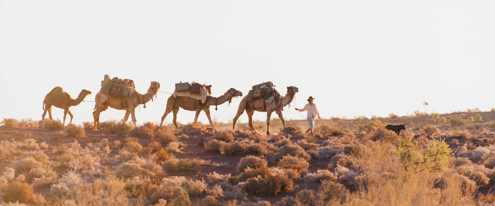 Тропы Tracks верблюды Австралия