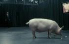"""Netflix снимет продолжение """"Черного зеркала"""""""
