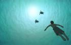 В прокат выходит мультфильм-номинант на «Оскар» «Красная черепаха»