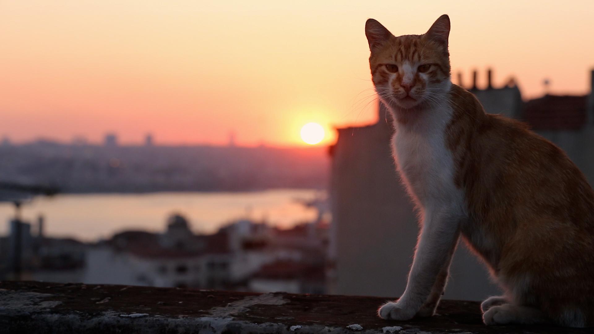 Королевство котов