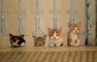 """""""Королівство котів"""": гарне сімейне кіно стартує 21 грудня"""